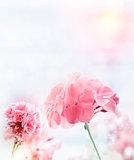 Pink Geranium Watercolor