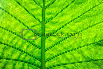 Close up green leaf texture