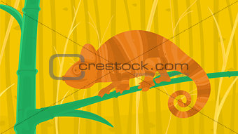 Chameleon in the Forest