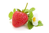 Fresh strawberry.