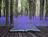 Creative concept pages of book Vibrant bluebell carpet Spring