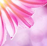 Gentle pink floral border
