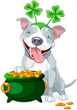 Pit bull celebrates Saint Patrick Day