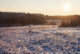 Sunny winter nature landscape