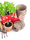 Garden tools with seedlings vegetable