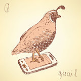 Sketch fancy quail in vintage style
