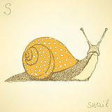 Sketch fancy snaill in vintage style