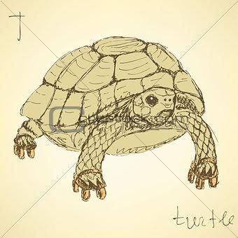 Sketch fancy turtle in vintage style