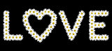The word love made with daisies flower