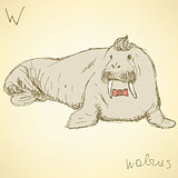 Sketch fancy walrus in vintage style