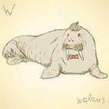 Sketch fancy walrus in vintage style