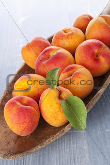 Fresh apricot eating.