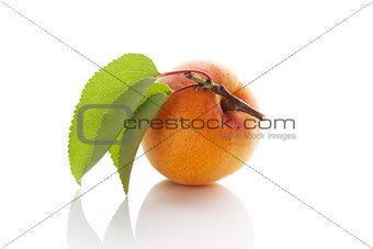 Fresh apricot.
