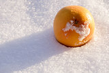 Orange in Snow
