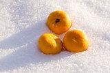 Orange in Snow