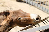 donkey wants to eat