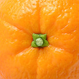 Ripe Juicy Orange