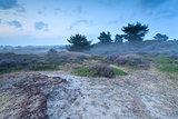 misty dusk on sand dunes with heather