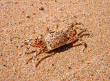 crab on beach