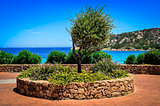 Olive tree in beautiful garden at ocean coast