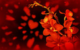 Red orchid love background