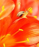 Macro on snail