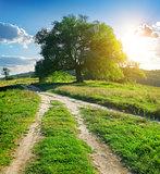 Tree pathways