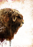 Muskox Watercolor