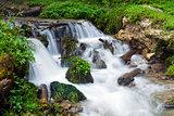 Forest stream surrounded by vegetation running over rocks