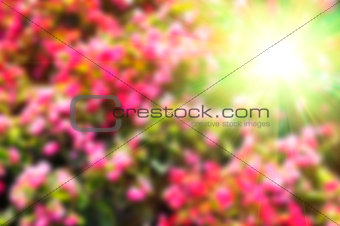 Abstract blurred colorful floral