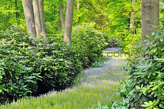 green forest in  spring time