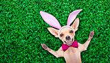 easter egg bunny dog