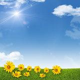 Sunflowers on background of sky, clouds, sun