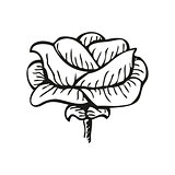 Rose in tattoo style, hand drawn flower