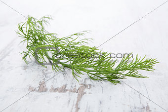 Culinary herbs. Dill.