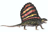 Dimetrodon Permian Reptile