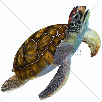 Green Sea Turtle Profile
