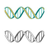 Set of two  DNA symbols on white background