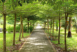 Stone path into garden