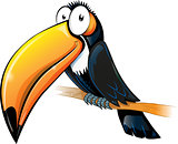 fun toucan cartoon isolated on white