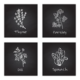 Handdrawn Illustration - Health and Nature Set. Culinary herbs