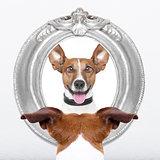 dog at the mirror