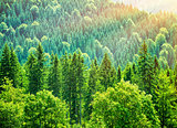 Green tree forest background