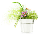 Bucket of fresh spring wild flowers