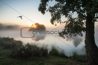 Beautiful Autumnal landscape image of birds flying over misty lake