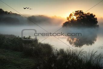 Beautiful Autumnal landscape image of birds flying over misty lake