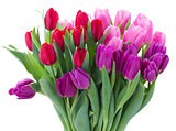 bouquet of  red and purple  tulip flowers