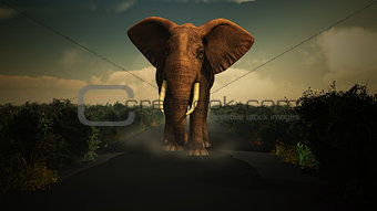 3D elephant walking towards camera