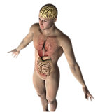 3D male figure with internal organs and brain