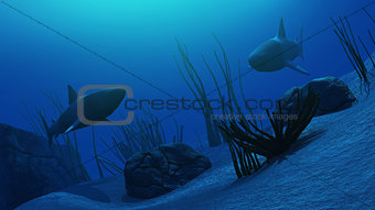 3D Underwater scene with sharks